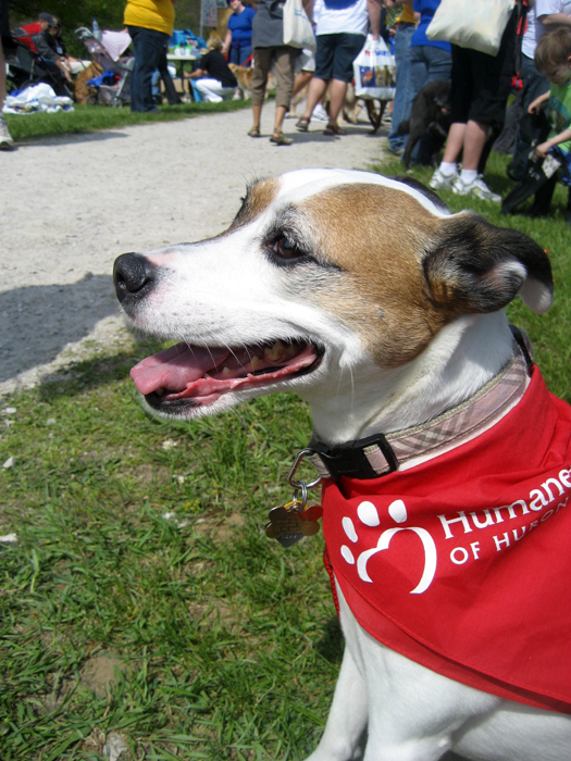 Melody at the 2008 HSHV Walk & Wag